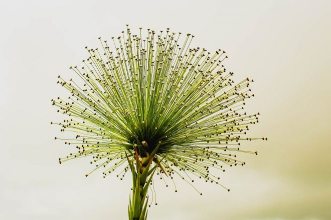 flower-2071522_1920
