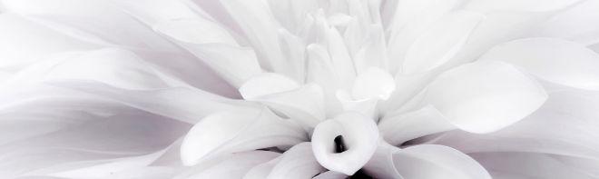 flower-2203357_1920