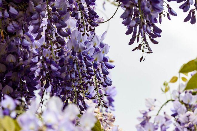 flowers-4213889_1920