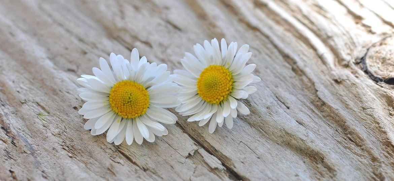 flowers-736543_1920